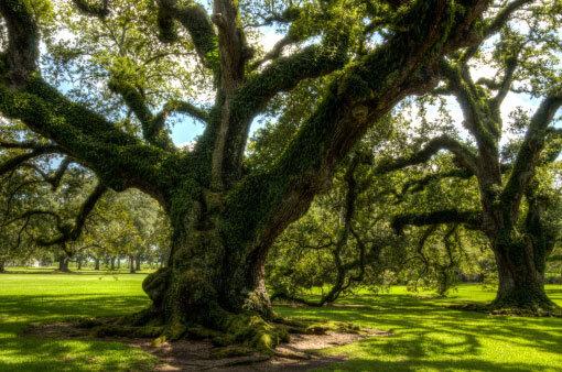 live oak care
