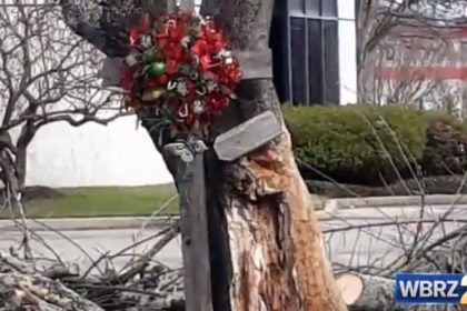 A special tree in Baton Rouge