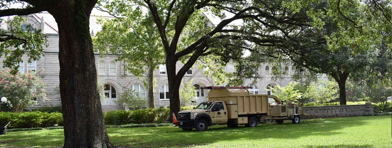 Licensed Louisiana Arborists Serving South Louisiana Since 1980